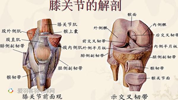 膝关节损伤后,滑膜产生渗出液,使关节腔内的积液增加,关节腔就像个